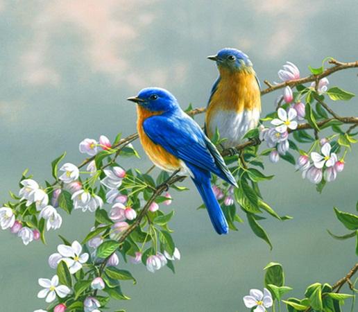 Spring-birds-for-Berni-yorkshire_rose-29579832-516-450
